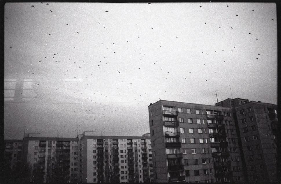Ptaki - Bielsko